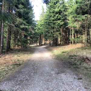 12/04 - The path up to Großer Feldberg.