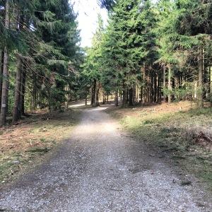 12/04 - The path up to Großer Feldberg.