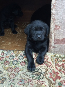 26/06 - Look how big the puppies got!
