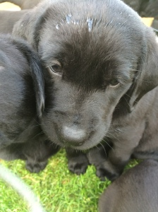 29/06 - Just another photo of cute puppies...