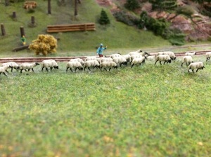 28/10 - Herding his sheep.